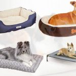 Best Portable Dog Bed to Have in Review 2018